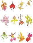 Carte de colorat ORHIDEIE.cdr